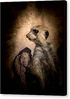 Meerkat 12 Canvas Print by Ernie Echols