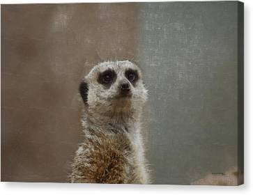 Meerkat 5 Canvas Print by Ernie Echols
