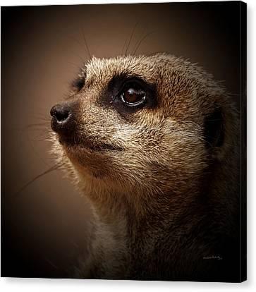 Meerkat 6 Canvas Print by Ernie Echols