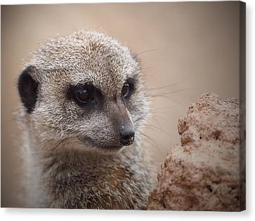 Meerkat 7 Canvas Print by Ernie Echols