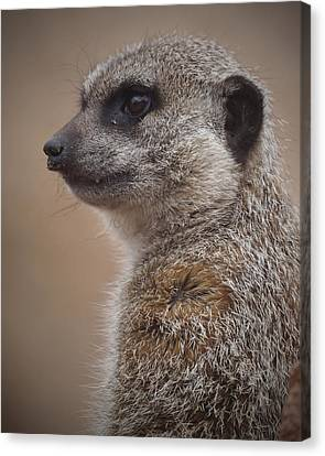 Meerkat 9 Canvas Print by Ernie Echols