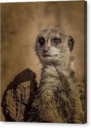 Meerkat Canvas Print by Ernie Echols
