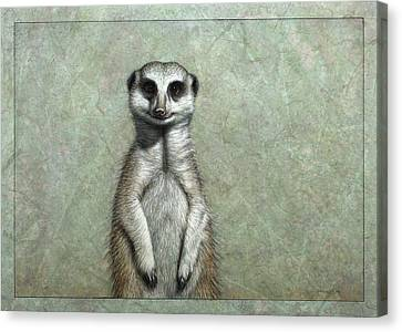 Meerkat Canvas Print by James W Johnson