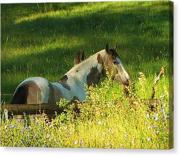 Meet Me At The Fence Canvas Print by Feva  Fotos