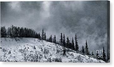Melancholia Pines And Trees Canvas Print by Priska Wettstein