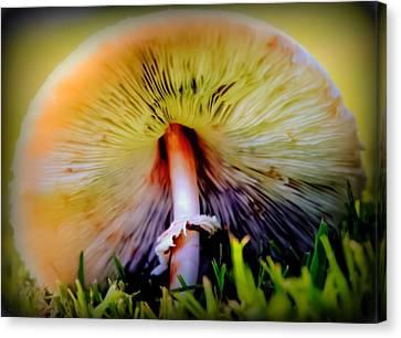 Mellow Yellow Mushroom Canvas Print by Karen Wiles