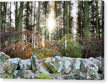 Melting The Mist Canvas Print by David Birchall