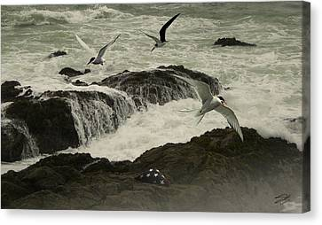 Seashore Memorial  Canvas Print by Schwartz