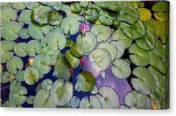 Memories Of Monet Canvas Print by Barbara Chichester