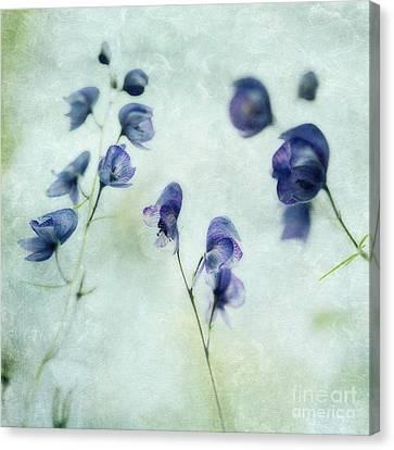 Memories Of Spring Canvas Print by Priska Wettstein