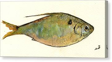 Menhaden Fish Canvas Print by Juan  Bosco