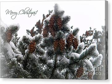Merry Christmas Pinecones Canvas Print by Michelle Frizzell-Thompson