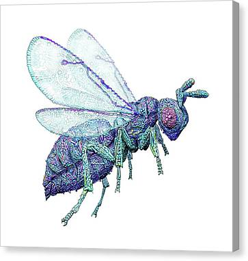 Microbial Wasp Canvas Print by Nicolle R. Fuller