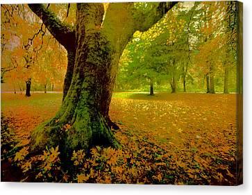 Autumn Splendor Canvas Print by Bonnie Bruno