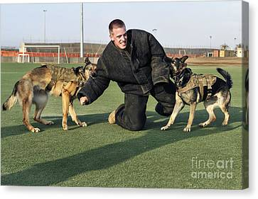 Military Working Dogs Subdue A Handler Canvas Print by Stocktrek Images