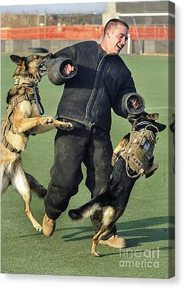 Military Working Dogs Take Canvas Print by Stocktrek Images