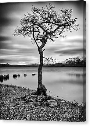 Millarochy Tree Loch Lomond Canvas Print by John Farnan