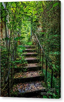 Mind Your Step Canvas Print by Adrian Evans