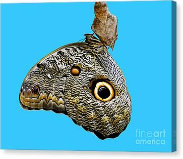 Mindo Butterfly Canvas Print by Al Bourassa