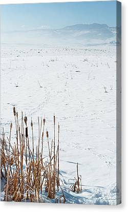 Minimalist Cattail Prairie In Colorado Canvas Print by Julie Magers Soulen