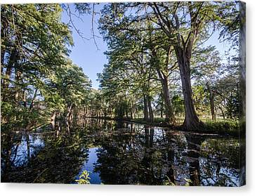 Mirror On The Frio Canvas Print by Jeffrey W Spencer