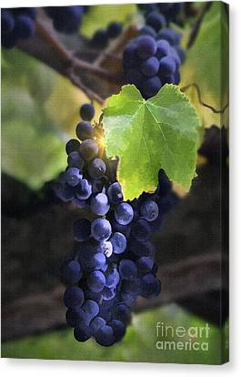 Mission Grapes II Canvas Print by Sharon Foster