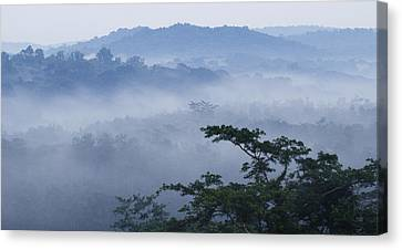 Mist Over Tropical Rainforest Kibale Np Canvas Print by Sebastian Kennerknecht