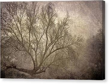 Mist Tree Canvas Print by Guido Montanes Castillo