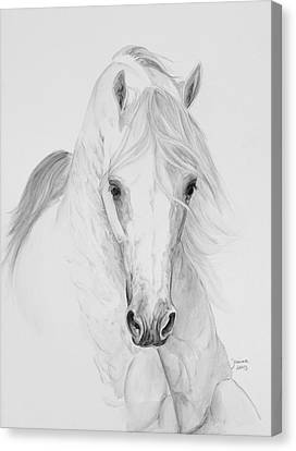 Misterioso 2013 Canvas Print by Janina  Suuronen