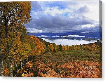 Misty Day In The Cairngorms II Canvas Print by Louise Heusinkveld