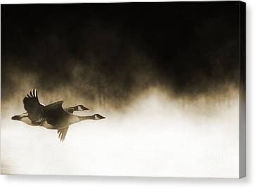 Misty Flight Canvas Print by Tim Gainey
