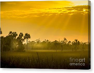 Misty Glade Canvas Print by Marvin Spates