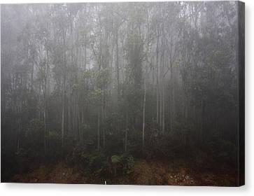 Misty Canvas Print by Ian  Ramsay