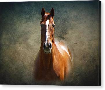 Misty In The Moonlight Canvas Print by David Dehner