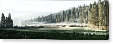 Misty Morning In Yosemite Canvas Print by Jane Rix