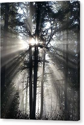 Misty Morning Sunrise Canvas Print by Crista Forest