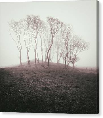 Misty Trees Canvas Print by Dave Bowman
