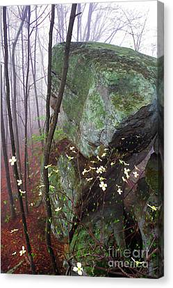 Misty Woods Canvas Print by Thomas R Fletcher