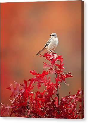 Mockingbird Autumn Canvas Print by Bill Wakeley