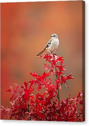 Mockingbird Autumn Canvas Print by Bill Wakeley