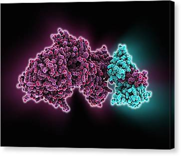 Molecular Motor Protein Canvas Print by Science Photo Library