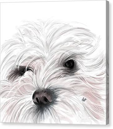 Mollie Canvas Print by Maria Schaefers