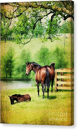Mom And Foal Canvas Print by Darren Fisher