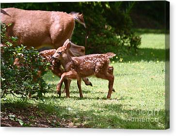 Mommy Is Here Time To Run Canvas Print by Kym Backland