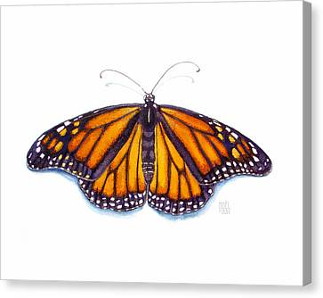 Monarch Butterfly Canvas Print by Catherine Noel
