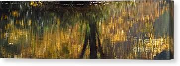 Monet At The Biltmore Canvas Print by Anita Adams