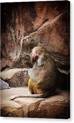 Monkey Business Canvas Print by Karol Livote