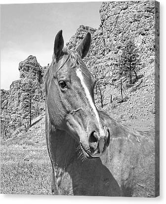 Montana Horse Portrait In Black And White Canvas Print by Jennie Marie Schell