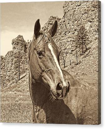 Montana Horse Portrait In Sepia Canvas Print by Jennie Marie Schell