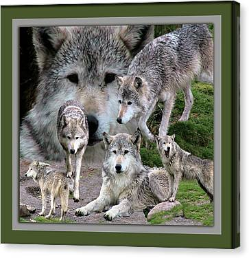 Montana Wolf Pack Canvas Print by Thomas Woolworth